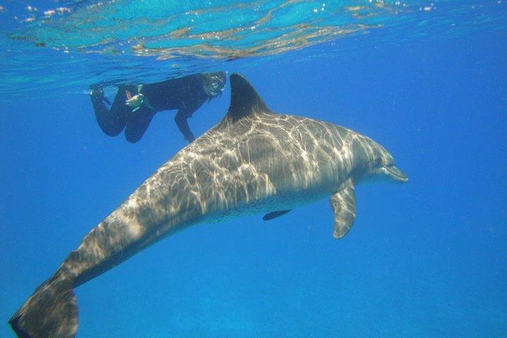 Sara e il delfino con la pinna diversa